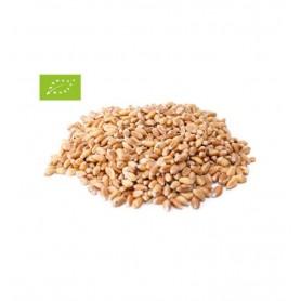 Grau Bio Boabe Pronat - 25 kg