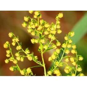 Pulbere de Pelinita 75g - Plantaria