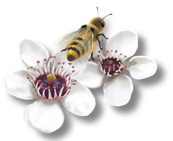floare de manuka 1 - plantum-ro (2).jpg