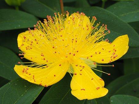 sunatoare-plantum-ro