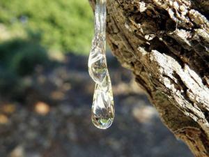 lacrima-de-mastic-plantum-ro