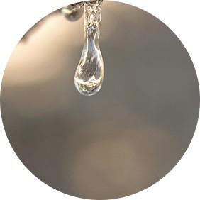 lacrima de mastic - plantum-ro_7.jpg
