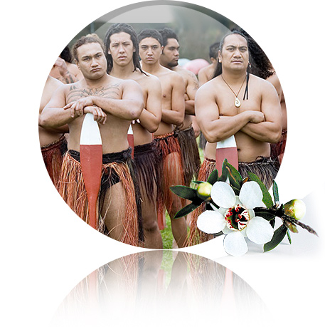 tribul-maori-plantum-ro