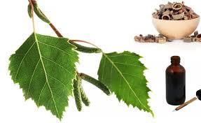 mesteacan-plantum-ro