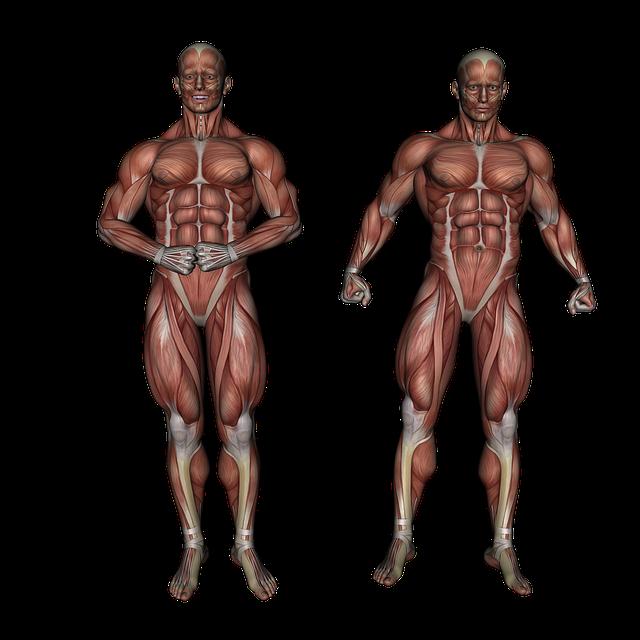 sistem-muscular-plantum-ro