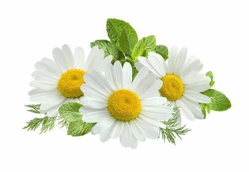 musetel - plantum-ro_3.jpg