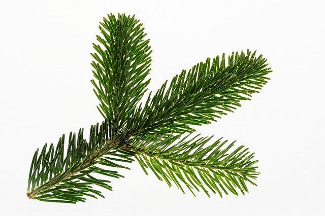 brad-plantum-ro