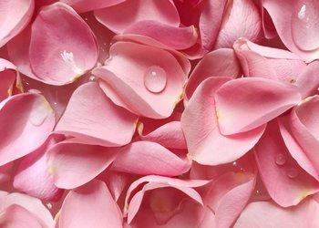 petale-de-trandafir-plantum-ro