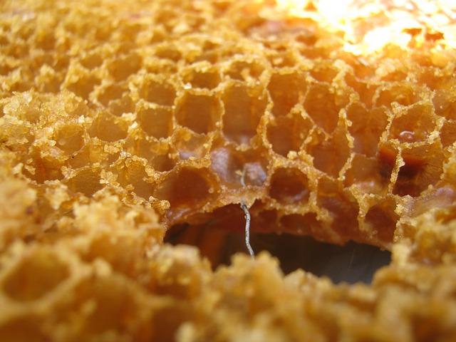 ceara-de-albine-plantum-ro